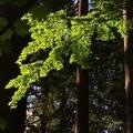 Free: Leach Botanical Garden: Saturday Guided Tour
