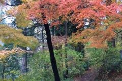 Free: Volunteer at Leach Botanical Garden: Gift Shop