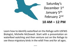 Free: Waterfowl Watch 101
