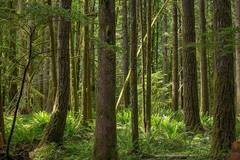 Free: Old Growth Cedar Wetlands Preserve