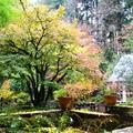 Booking (trips, etc.): Yoga at Leach Botanical Garden