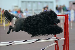 Varies/Learn More: Rose City Classic Dog Show in Portland, Jan. 16-20