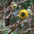 Booking (trips, etc.): Curator-Led Winter Interest Walk at Leach Botanical Garden