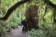 Free: Francis Shrader Old Growth Trail