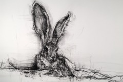 Free: The Beauty of Wild Things: Charcoal Drawings by April Coppin