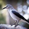 Selling: Birding for Breakfast