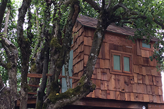 Booking (trips, stays, etc.): Tiny Serene Art-filled Treehouse