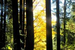 Free: Shinrin Yoku Guided Tour at Leach Botanical Garden