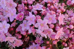 Free: Leach Botanical Garden 2019 Plant Sale