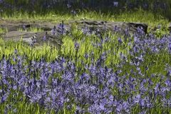Free: Camassia Natural Area in West Linn