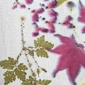 Booking (trips, stays, etc.): EcoDyeing Silk Scarves  with Anna Zell