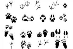 Free: Drop In Exploration Day: Animal Tracks
