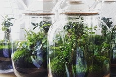 Selling: Weekend Workshop: Build a Terrarium