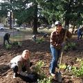 Free: Plant the Lents Park Nature Patch
