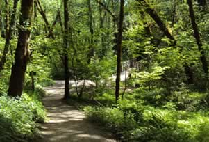 Hike in Tryon Creek State Natural Area